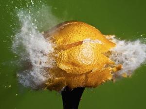 Lemon Aid by Alan Sailer