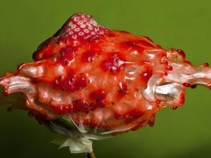 Weird Strawberry by Alan Sailer