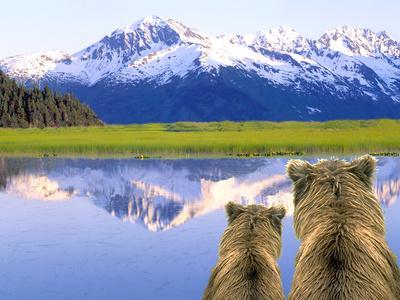 https://imgc.allpostersimages.com/img/posters/alaska-brown-bears-alaska_u-L-Q1D0I4E0.jpg?artPerspective=n