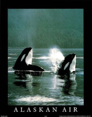 Alaskan Air Orcas Art Photo