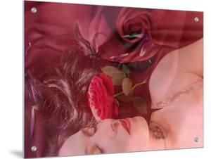 A Blush of Roses by Alaya Gadeh