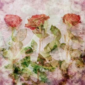 A Dreamy Floral Montage from Three Red Roses by Alaya Gadeh