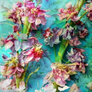 A Floral Montage from Flowers by Alaya Gadeh