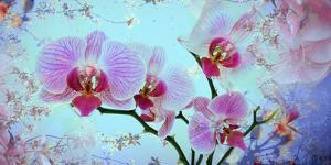A Floral Montage from Orchid and Spring Trees by Alaya Gadeh