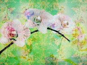 A Floral Montage, Layer Work from Blooming Flowers by Alaya Gadeh