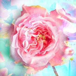 A Floral Montage of a Mallow and a Rose in Powerful Pastels, Photograph, Layer Work by Alaya Gadeh