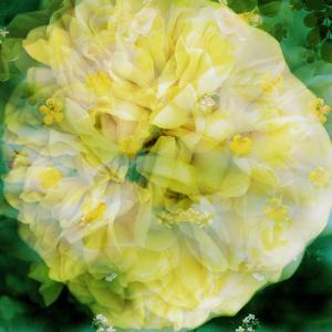 A Floral Montage Photographic Layer Work by Alaya Gadeh