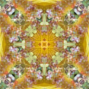 A Floral Montage with Leafes by Alaya Gadeh
