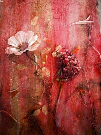 A Montage of Acre Flowers by Alaya Gadeh
