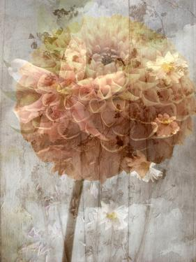 A Poetic Floral Montage of Daisy and Lily by Alaya Gadeh