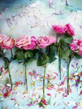 A Poetic Floral Montage of Roses by Alaya Gadeh