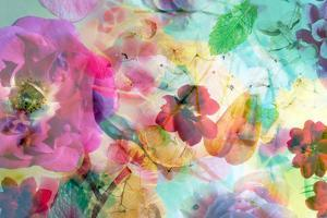 Abstract Dreamy Multicolor Blossoms in Water by Alaya Gadeh