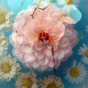 Charismatic Soft Pink Dahlia with Orchid and Daisy by Alaya Gadeh