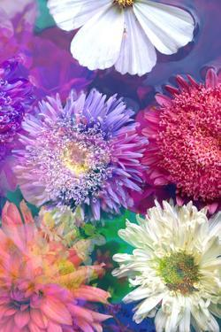 Colorful Dahlia Blossoms in Water by Alaya Gadeh