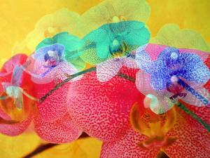 Colorful Layer Work from Orchids by Alaya Gadeh