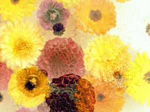 Colorful Layer Work from Yellow and Brown Blossoms by Alaya Gadeh