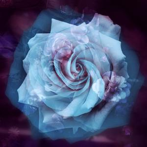 Composing of a White Rose Layered with Blue Tones and Blossoms by Alaya Gadeh