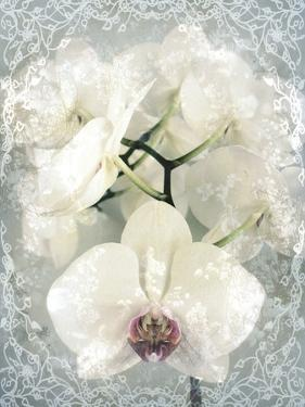 Composing, White Orchid Framed by Floral Pattern by Alaya Gadeh