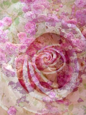 Composing, White Rose Layered with Pink Flower Texture by Alaya Gadeh