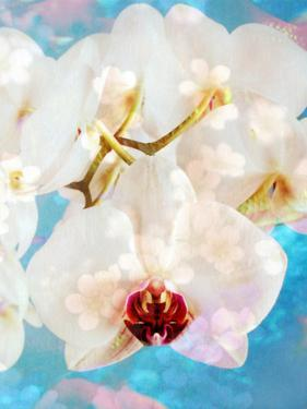 Composing with White and Pink Blossoms Infront of Blue Background by Alaya Gadeh