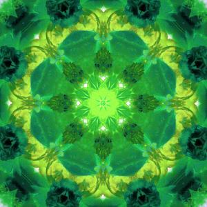 Energetic Mandala Ornament from Flowers by Alaya Gadeh