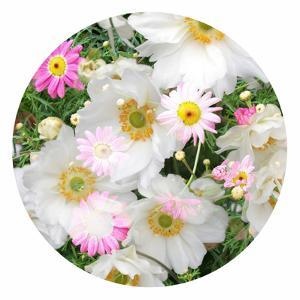 Flowers in a White Round Frame by Alaya Gadeh