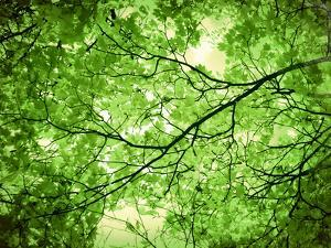 Foliage Tree, Branches, Branches, Leaves, Green by Alaya Gadeh
