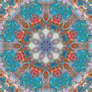 Mandala of Flower Photographies by Alaya Gadeh