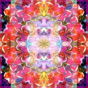 Mandala Ornament from Red Blooming Orchids, Conceptual Photographic Layer Work by Alaya Gadeh