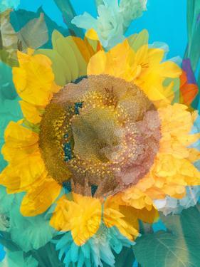 Montage of a Sunflower, Composing by Alaya Gadeh