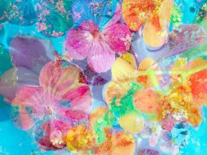 Montage of Flower Photographies by Alaya Gadeh