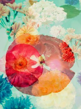 Montage of Flowers in Water, Composing by Alaya Gadeh