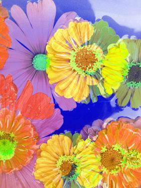 Multicolor Blossom Design from Zinnia, Gerber Daisy and Texture, Photographic Layer Work by Alaya Gadeh