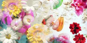 Multicolor Blossoms in Water by Alaya Gadeh