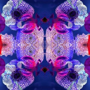Ornament from Flowers, Photographic Layer Work by Alaya Gadeh