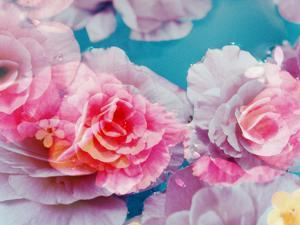 Photographic Layer Work from Blossoms in Water by Alaya Gadeh