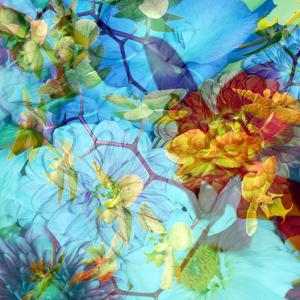 Photographic Layer Work from Orchids by Alaya Gadeh