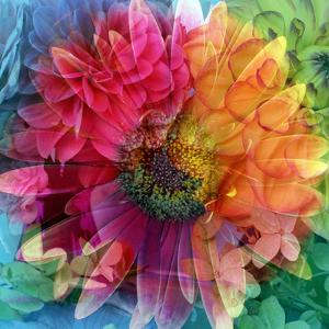 Photographic Layer Work of a Big Blossom in Multicolor by Alaya Gadeh
