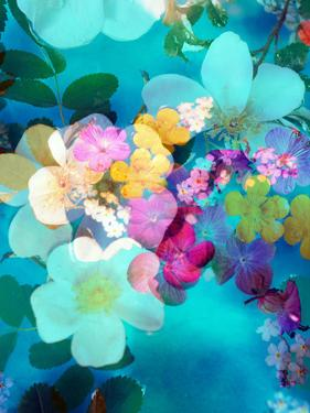 Photomontage of Blossoms in Water by Alaya Gadeh
