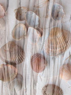 Photomontage of Grass and Mussels by Alaya Gadeh