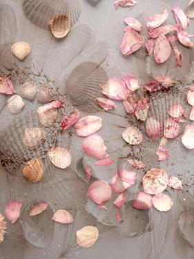Photomontage of Mussels, Rose Petals and Sunflower by Alaya Gadeh
