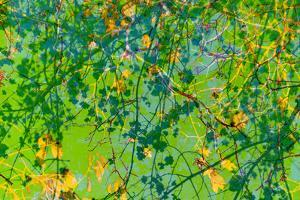 Photomontage of Trees in Green Tones by Alaya Gadeh