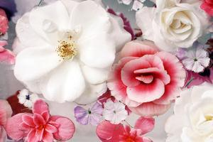 Pink and White Blossoms in Water by Alaya Gadeh