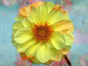 Portrait of a Yellow Dahlia with Floral Layers and Emotion by Alaya Gadeh