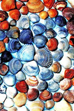 Seashells from the North Sea in Different Colors by Alaya Gadeh