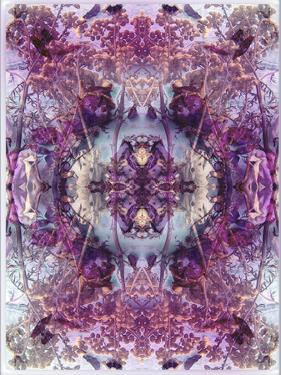 Symmetric Floral Montage from Flowers by Alaya Gadeh