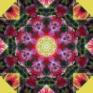 Symmetric Layer Work from Flower Photographs by Alaya Gadeh