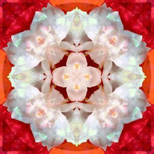Symmetrical Photomontage of a White Orchid on Red Floral Ornament with Circle by Alaya Gadeh