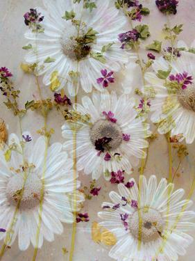 White Wild Daisies with Acre Flowers by Alaya Gadeh