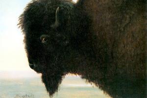 Albert Bierstadt Buffalo Head by Albert Bierstadt